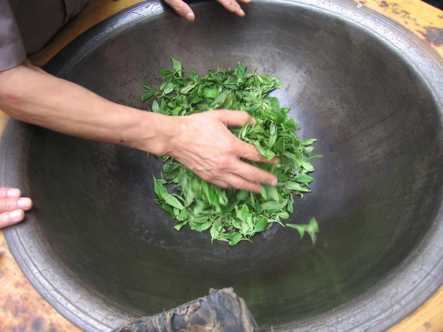 Drying the Longjing tea